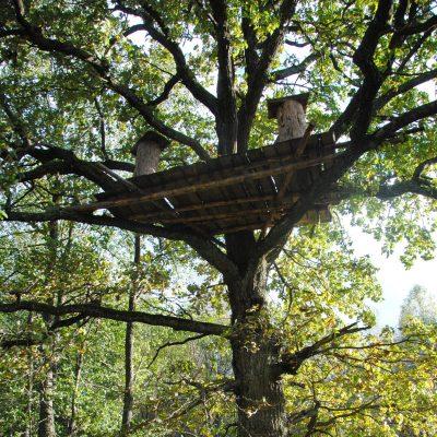 Treebeekeeping platform at Naliboki Forest, Belarus.