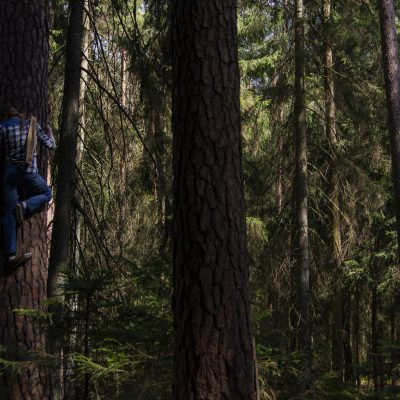 Treebeekeepers hive inspection at Augustow Forest, Poland, Fot. P. Mikucki